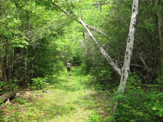 the beautiful trail