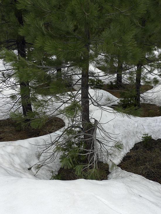 tree holes