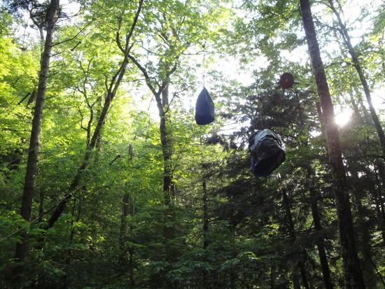 Bear Hang