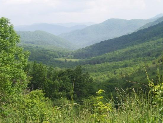 View in front of Overmountain Shelter