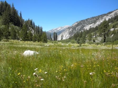 Meadow Woods Creek