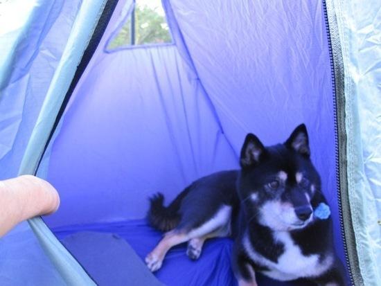 Pup Tent 5