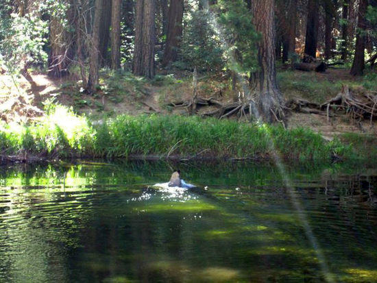 Bear swimming across a pond in Yosemite Valley