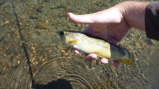 trout4