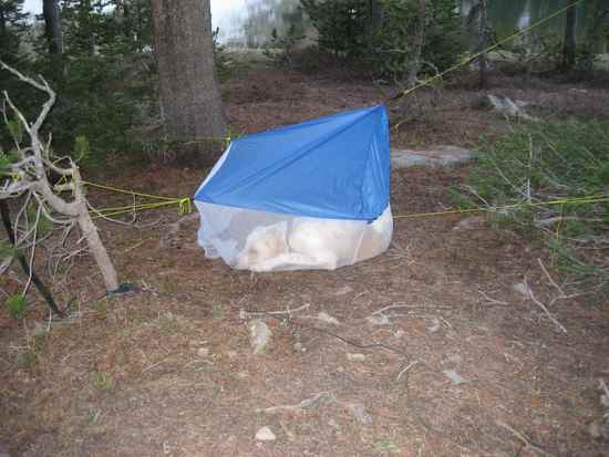 "MYOG Dog Tent - ""Bear Tent"""