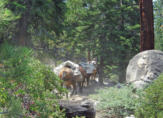 Ranger and Her Mule Train Leaving Roaring RIver Stataion