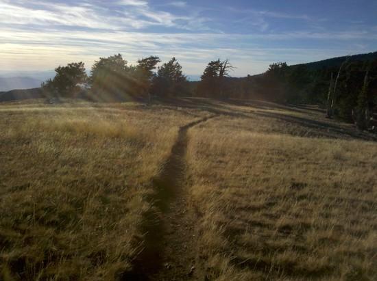 Grassy ridge south of Mt. Charleston