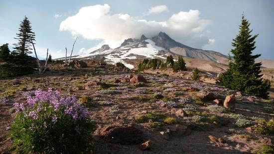 Mt. Hood flowers