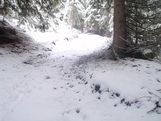 Following deer tracks