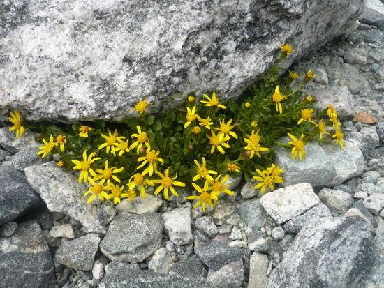 titcomb flowers