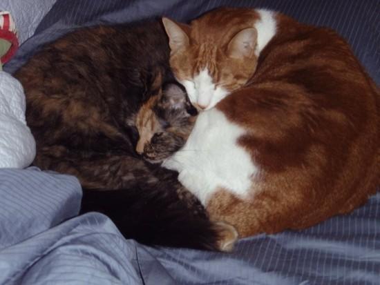 heartcats
