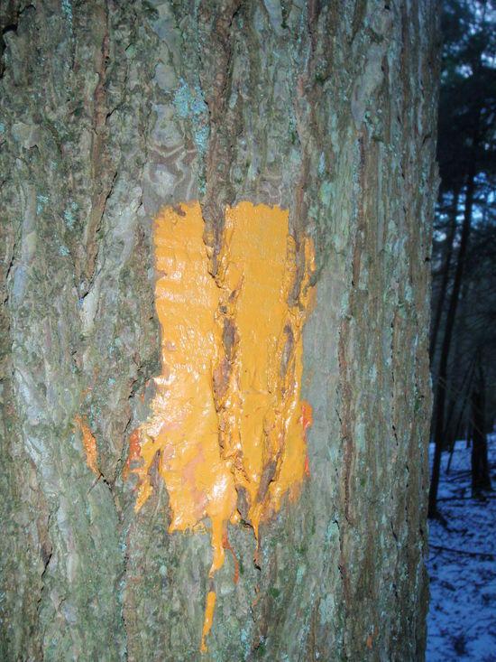 Orange BFT Blaze