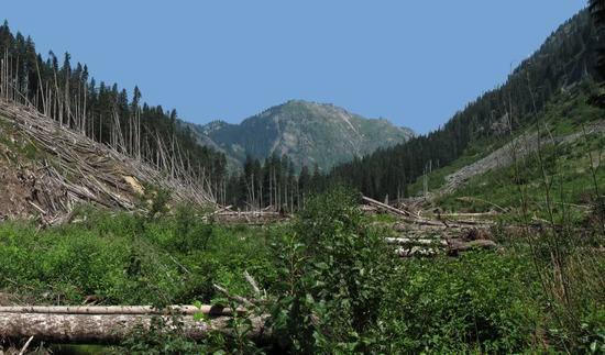 Gold Creek avalanche area photo panorama