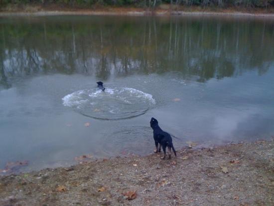 lila the 25' novice jumping dog