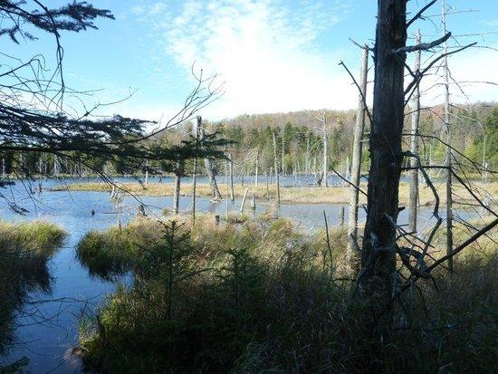 Looking to my right as I headed south down the trail – Oswegatchie River