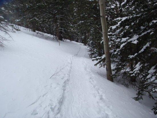 """""""10K Trail"""" under snow"""