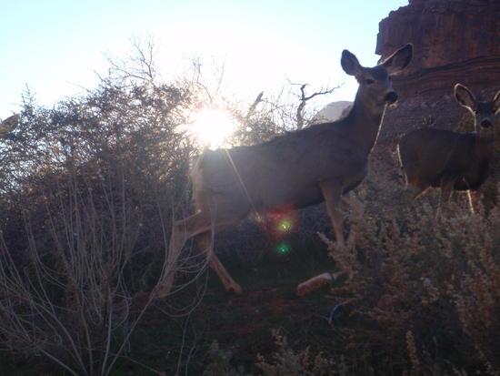 Mule Deer at the park museum