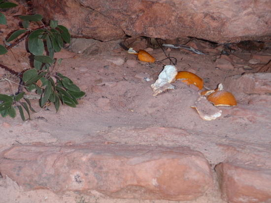 Orange peels (trash) at Scouts Lookout!!