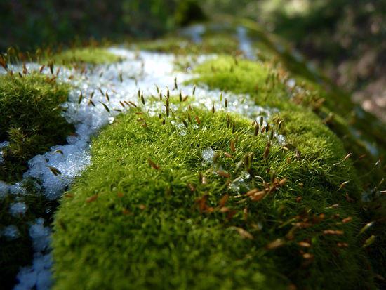 Ice, Moss & Shoots