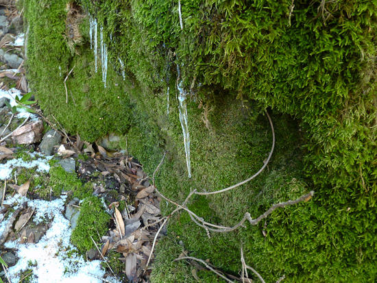 Icicles & Moss