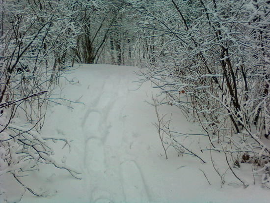 Looking back towards the west trail head.  6-8 inches of fresh wet snow.