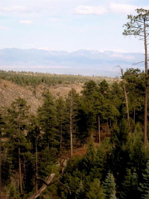 Conifers below mesa