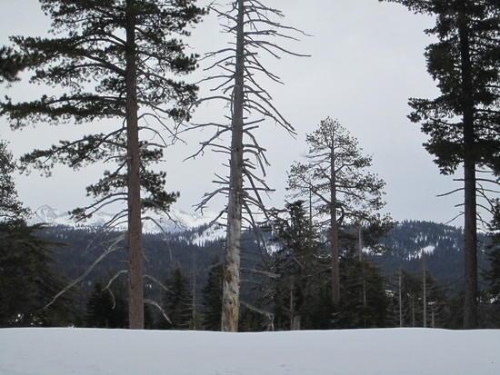 Tree's