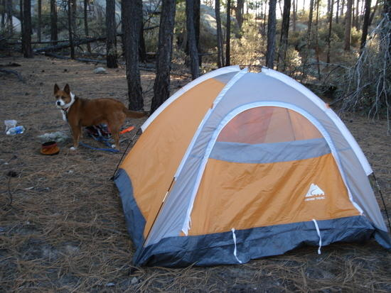 They used to sell new for $20 at Wal-Mart but they stopped making them. Anyway I wanted a free-standing tent because I canu0027t always find non-rocky ground ... & Ultra-cheap lightweight free-standing tent - Backpacking Light