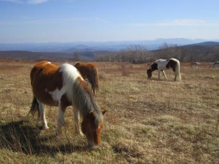 Ponies on 1st Peak Trail