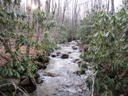 Little WIlson Creek