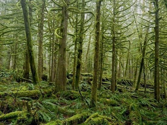 Woods near Wallace Lake, Washington