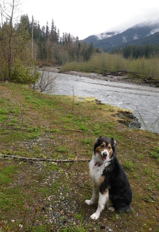 Toby on the Suiattle River