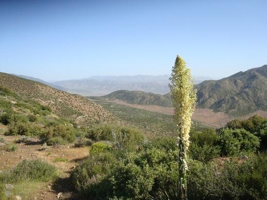 Desert floor and San Felipe Hills in distance