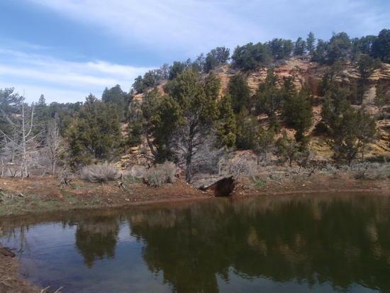 Dirt dam below Stave Spring
