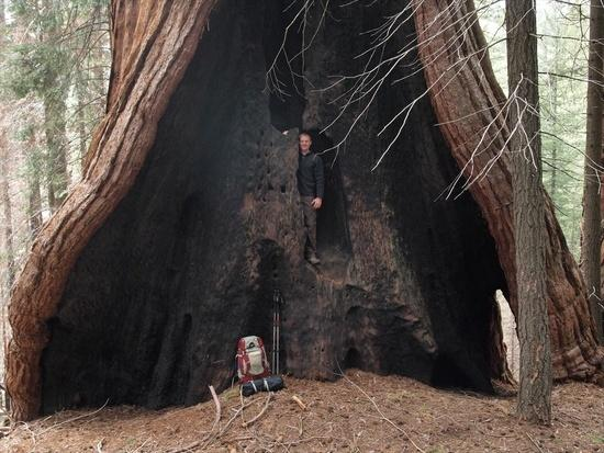 Brian in the Hart Tree