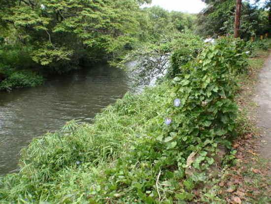 Waipio River