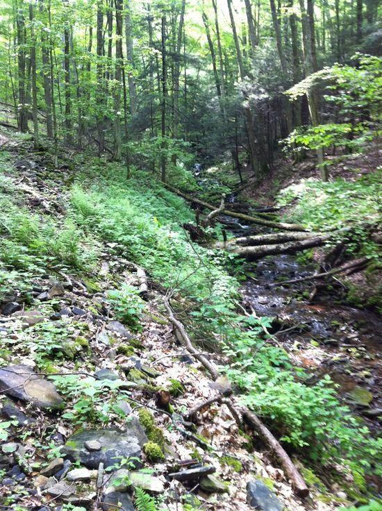 Christian Run Trail, getting brushy