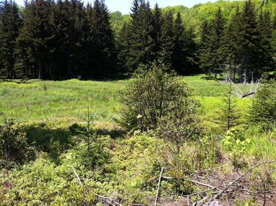 Meadow along Buck Run Trail