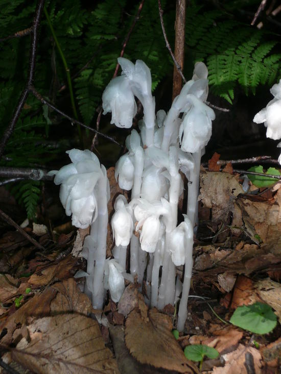 mushroom 18