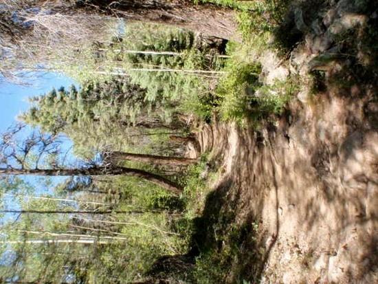 ridgetop trail