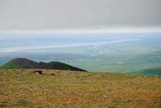 Alaska Plains