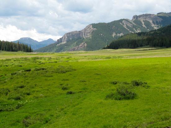 Headwaters meadow on N Clear Creek