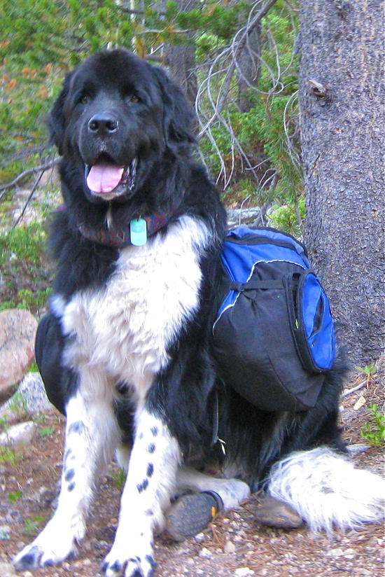 Always ready for a hike