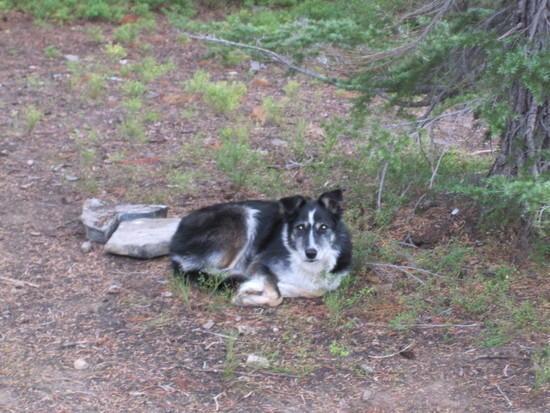 Moxie's wilderness bed.