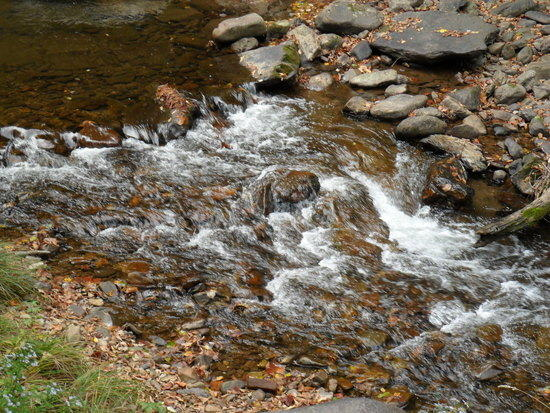 Water Flowing Alongside The Virginia Creeper / AT