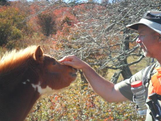 Newton with One Pony