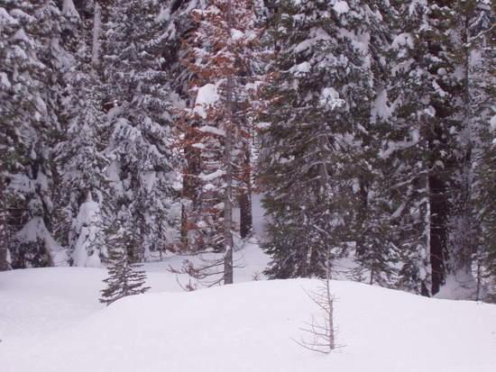 Snow on Pine Mountain GA, January 2008