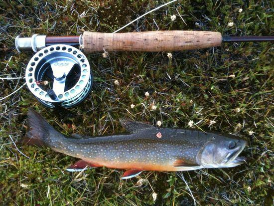 brook trout on JMT