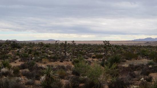 q valley