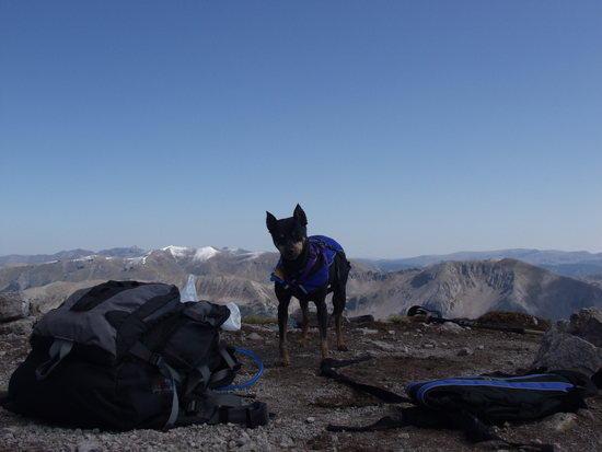 Charlie on Pagosa Peak